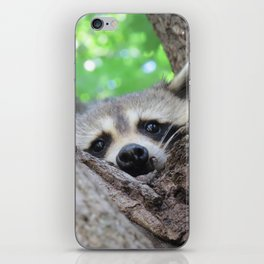 Curiousity From A Tree iPhone Skin