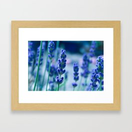 A Touch of blue - Lavender #1 Framed Art Print