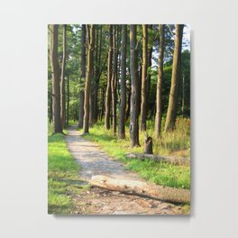 Forest Pathway Metal Print