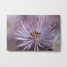 Summer Flower Metal Print