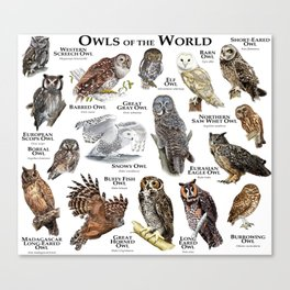 Owls of the World Canvas Print
