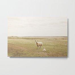 Farm Photography of Sheep Metal Print