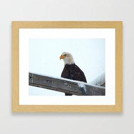 Winter Eagle Framed Art Print