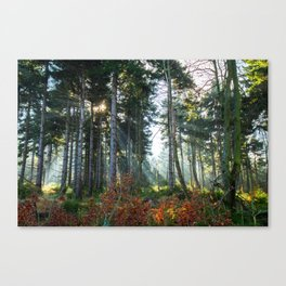 Great Owl Canvas Print