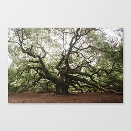 The Angel Oak Canvas Print