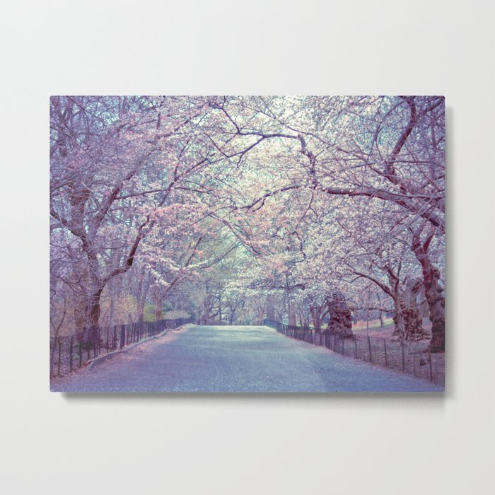 New York City Cherry Blossoms Path Metal Print