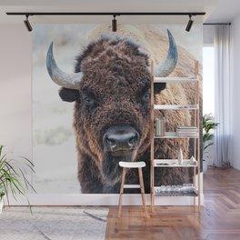 American Bison  -  A Living National Treasure Wall Mural