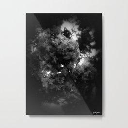 Crape Myrtle Dark Metal Print
