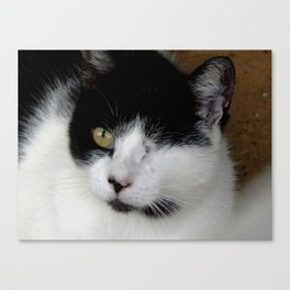 One-eyed Pete Canvas Print