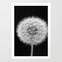 full dandelion Art Print