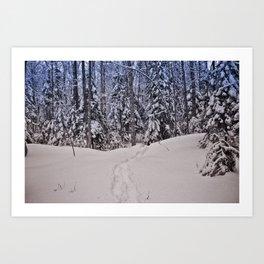 Vermont Winter Woodland Art Print