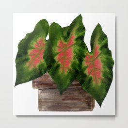 Potted Big Green Pink Leaves Metal Print