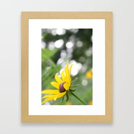 Sunflower & Bokeh Framed Art Print