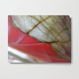 Begonia 412 Metal Print