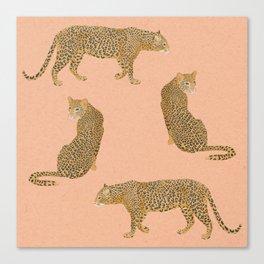 sunset leopards Canvas Print