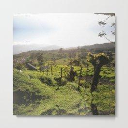 Green Sunny Landscape Metal Print