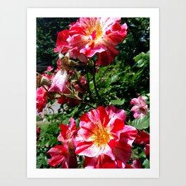 Heirloom Roses Art Print