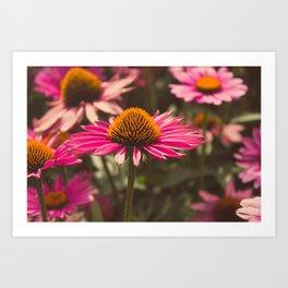 Pink Cone Flower Art Print
