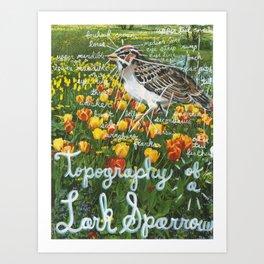 Topography of a Lark Sparrow Art Print