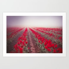 Tulip Perspective Art Print