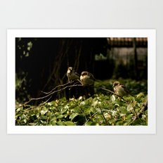 Birds of a Feather. Art Print