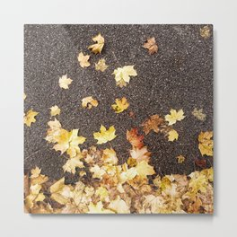 Gold yellow maple leaves autumn asphalt road Metal Print