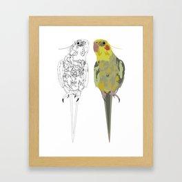 Matti, Cocatiel Framed Art Print