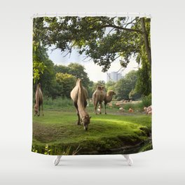 a momentary lapse of reason Shower Curtain