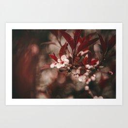 Little White Blossoms Art Print
