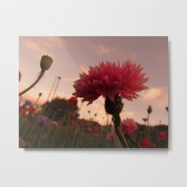 Wildflower Sunsets #1 Metal Print
