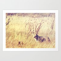 coyote Art Prints featuring Coyote  by Shelby Babbert Photography
