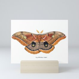 Polyphemus Moth (Antheraea polyphemus) II Mini Art Print