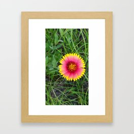 Breathtaking Wild flower Framed Art Print