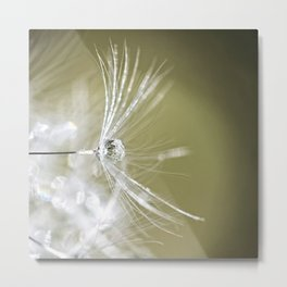 Dandelion Water Drop Macro 1 Metal Print