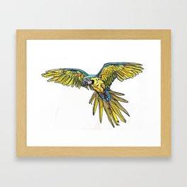 Blue Macaw Framed Art Print