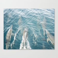 Dolphins Come Play  Canvas Print