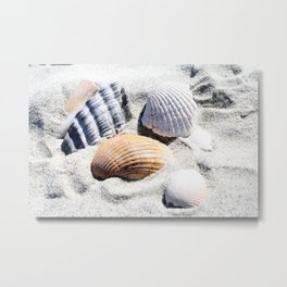 Shells in Charleston Metal Print