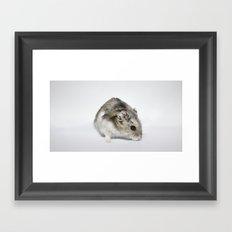 cheesecake (my hamster)  Framed Art Print