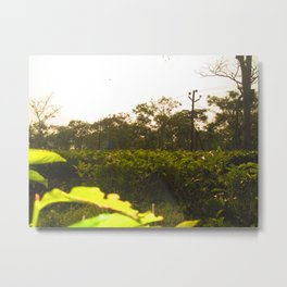 Tea Plants #India Metal Print