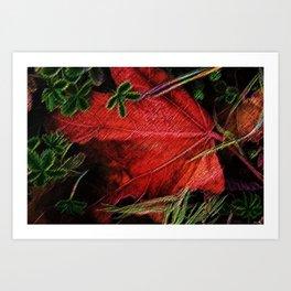 Autumn Leaves, New England--A Portrait by Jeanpaul Ferro Art Print