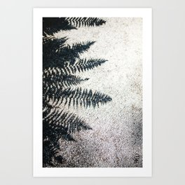 Fern Shadow Art Print
