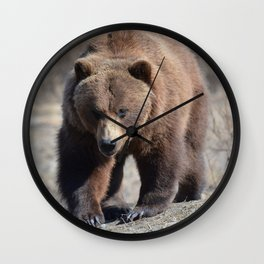 Alaskan Grizzly Bear - Spring Wall Clock