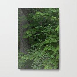 Spring Rain Foliage Metal Print