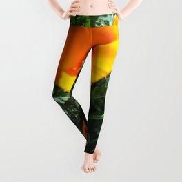 California Poppy Leggings