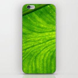 Leaf Paths iPhone Skin