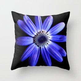 Blue gerbera Throw Pillow