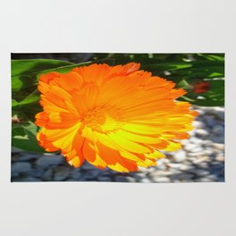 Bright Orange Marigold In Bright Sunlight Rug