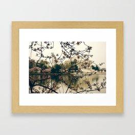 Cherry Blossom's  Framed Art Print
