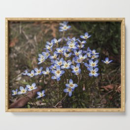 Wild Flowers Bluets Serving Tray