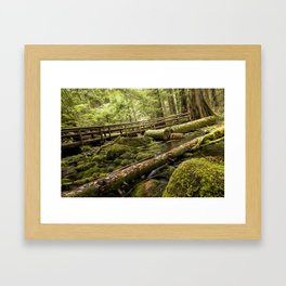 McKenzie River Trail No 1 Framed Art Print